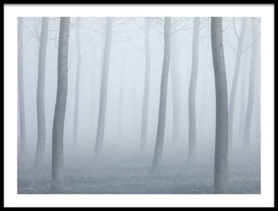 Vossington wall art and fine art photography of a dreamy forest scenery with tree trunks in a mystic mist