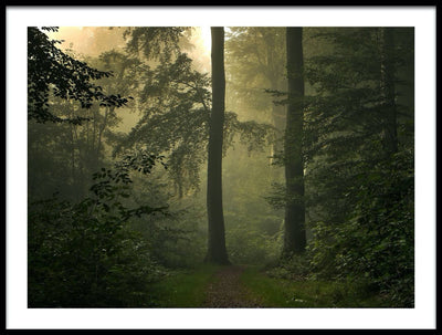 Vossington wall art and fine art photography of a misty forest scenery with a mysterious path between tall trees