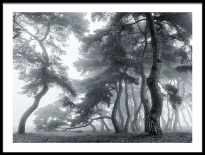 Vossington wall art and fine art photography of a dreamy forest scenery with pine trees in a mystic mist