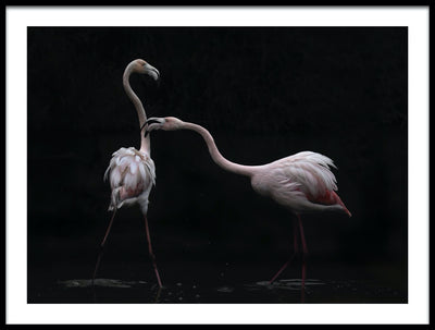 Vossington wall art and romantic fine art photography of a couple of flamingos in a lake reaching to kiss each other