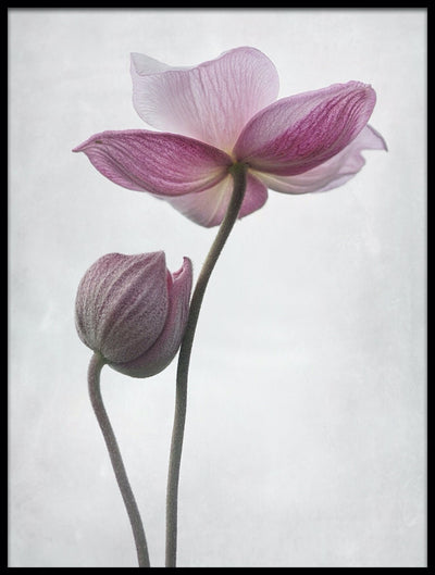Vossington wall art and fine art photography of two delicate flowers tenderly caressing each other on a gray background