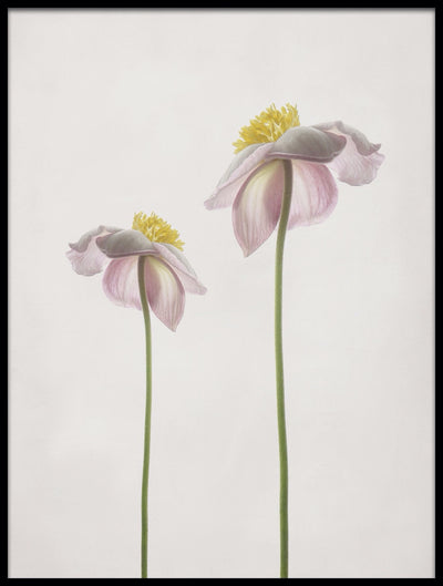 Vossington wall art and fine art photography of two summer flowers in a minimalist style