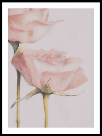 Vossington wall art and romantic fine art photography of two roses in a soft painterly style