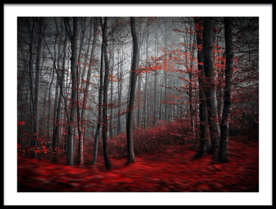 Vossington wall art and fine art photography of trees with red autumn leaves in a forest scenery