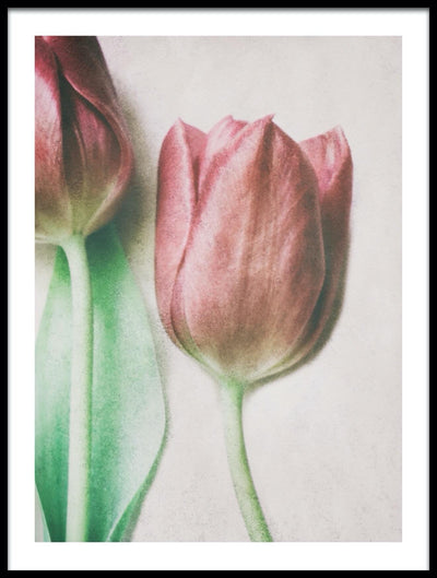 Vossington wall art and romantic fine art photography close-up of two tulips in a soft painterly style