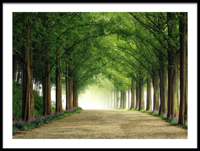 Vossington wall art and fine art photography of a park in the summer with rows of trees by a road leading into the fog