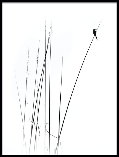 Vossington wall art and minimalist fine art photography of the silhouette of a bird sitting on reed against a white high-key background