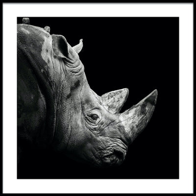 Vossington wall art and fine art photography of a majestic rhino with great horns against a black background