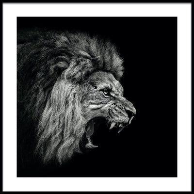 Vossington wall art and fine art photography of a powerful lion roaring against a black background