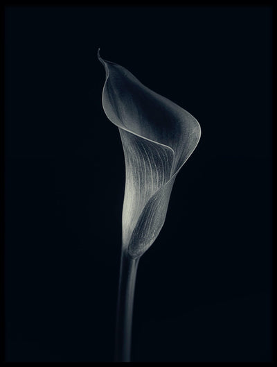 Vossington wall art and minimalist fine art photography of a single orchid flower against a dark background