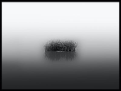 Vossington wall art and fine art photography of a peaceful lake with smooth water and reed coming out of the fog in a minimalist style