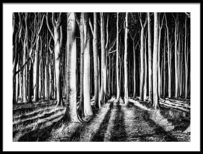 Vossington wall art and fine art photography of a forest scenery with high contrast trees casting shadows