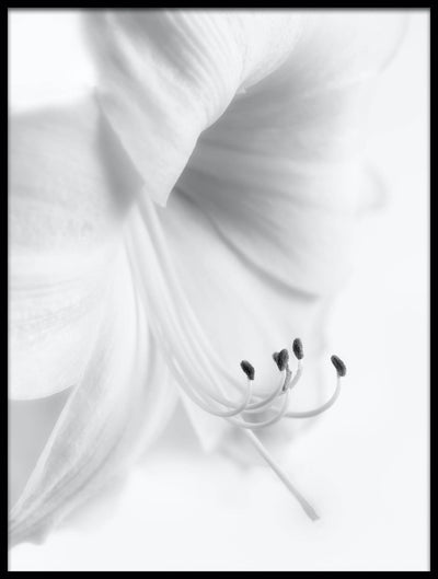 Vossington wall art and fine art photography close-up of a white flower in a high-key style