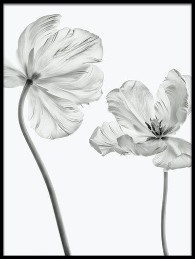 Vossington wall art and fine art photography of two blooming flowers facing each other against a white high-key background