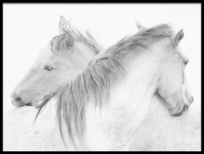 Vossington wall art and fine art photography of an act of love and friendship with two white horses hugging