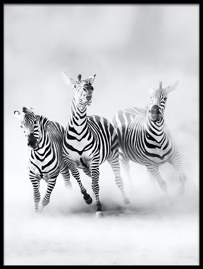 Vossington wall art and fine art photography of three zebras running through a cloud of dust