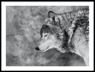 Vossington wall art and fine art photography of a winter scenery with a wolf on a snowy day