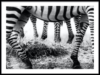 Vossington wall art and fine art photography of a savanna scenery with zebra legs