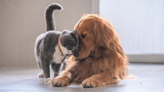 Cat and Dog pets