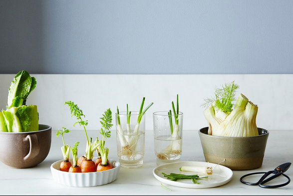 Grow it like you mean it! Simple hacks to regrow food from scraps