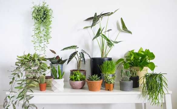 How to purify air and mind with your own urban jungle - 5 easy to care for plants