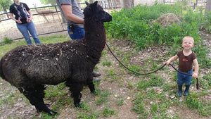 Alpaca Wool Yarn Fiber Farm Spinning Weaving Knitting Tools for Sale in Weiser Idaho