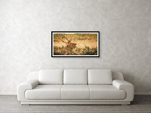 Framed fine photographic and art print hanging on a wall of a Roosevelt elk growling in golden field at Redwoods National Park.