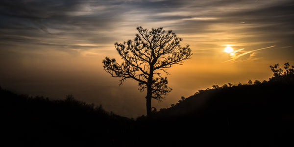 Fine Guadalupe Mountains National Park photography print of a tree silhouette in a misty dusk atop the mountain.
