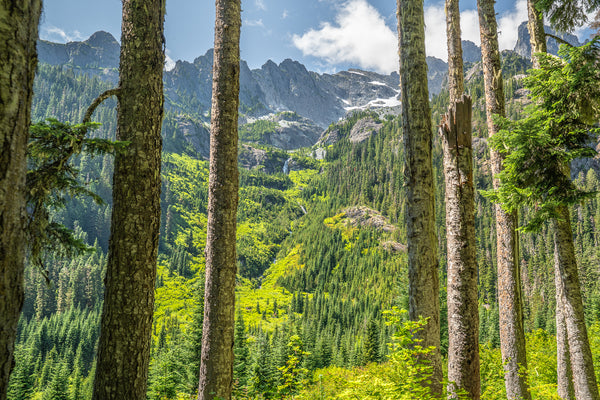 Fine Pacific Crest Trail photography print of a vibrant green landscape looking up at the high mountain range from below the tree covered valley on the PCT.