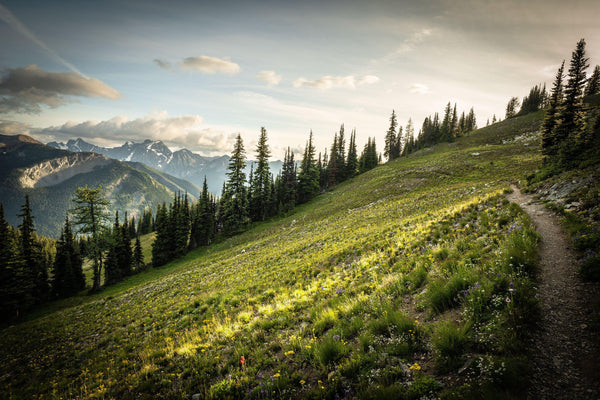 Fine photographic and art print of an evening walk along the sunkissed Washington Section of the Pacific Crest Trail north of Hart's Pass.