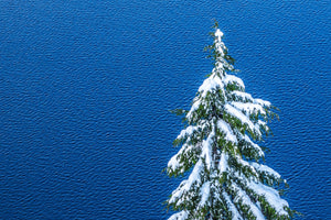 Fine print of a snow-capped evergreen on the banks of a wind-rippled Crater Lake National Park in Oregon.