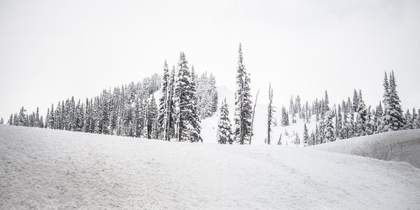 Fine Mount Rainier National Park photography print of white out conditions on the tree-covered mountain side.
