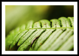 Framed fine photography print of a close up lusciously green fern growing in Olympic National Park.