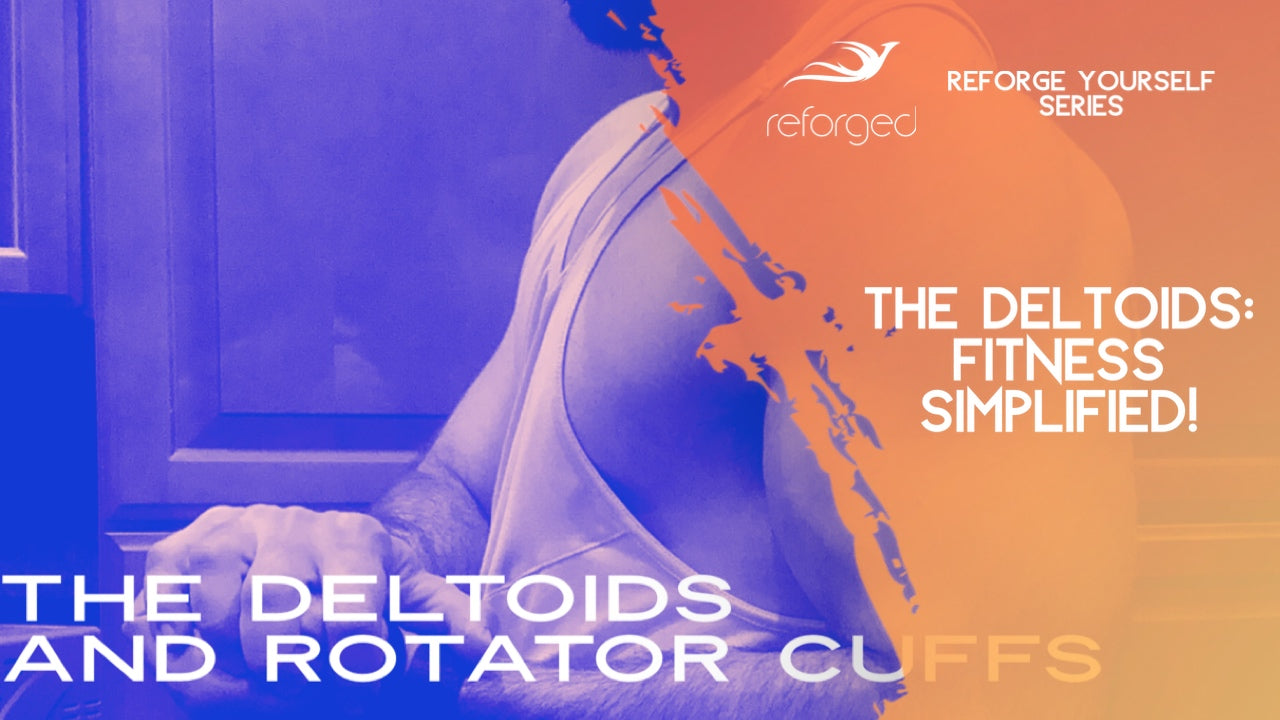 The Deltoids and Rotator Cuffs: Muscular Development Guide 2020