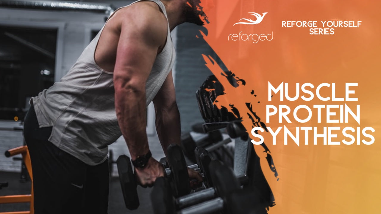 Muscle Protein Synthesis And 3 Ways to Optimize It!