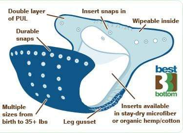 Organism, Electric ray