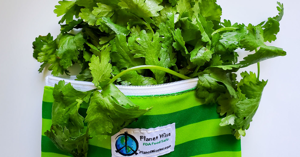 Cilantro Food Storage