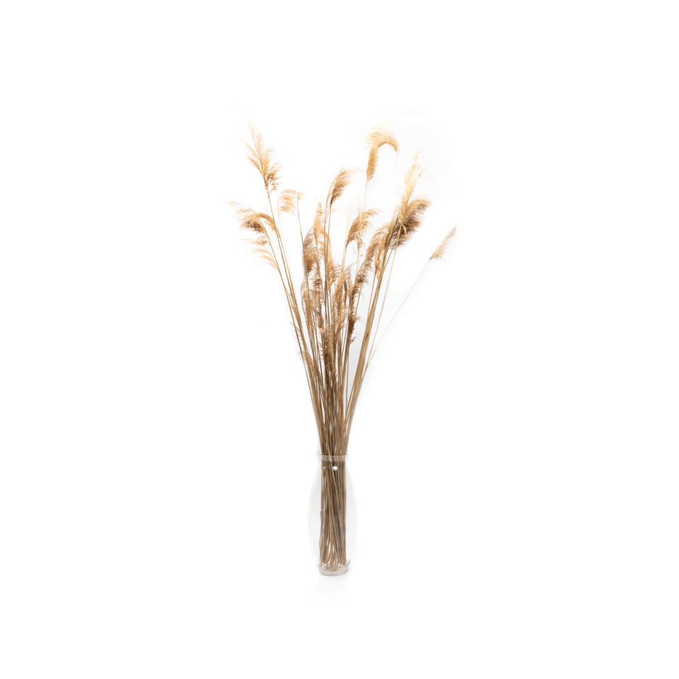 Pompas Grass in Glass Vase (2 Available)