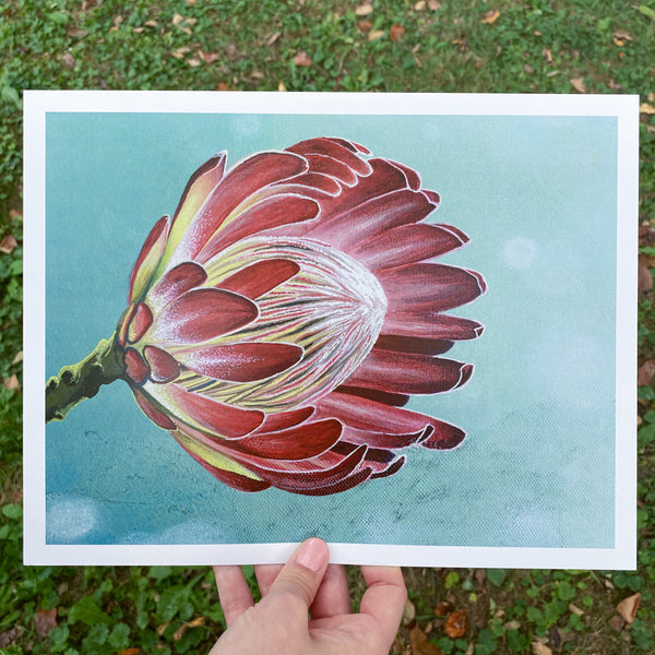 Protea - Limited Edition Print