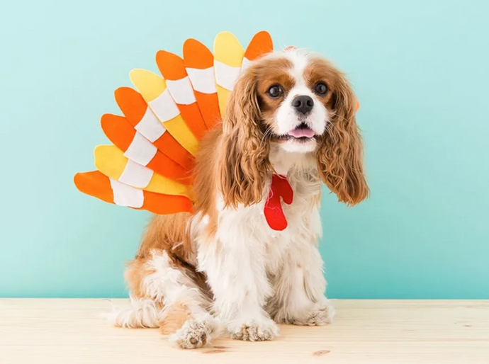 6 Of Our Fave: Easy DIY Halloween Dog Costumes