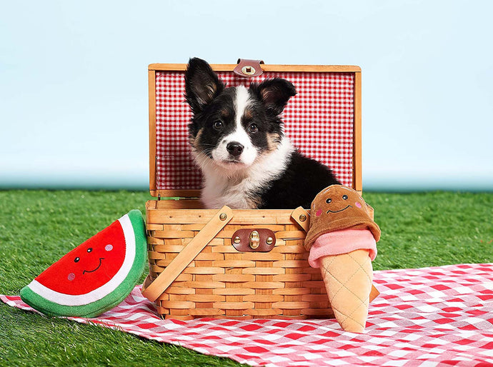 Toys Your Dog Would Rock This Summer