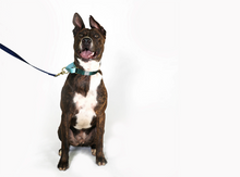 Load image into Gallery viewer, Colour Block Collection: Martingale Collar