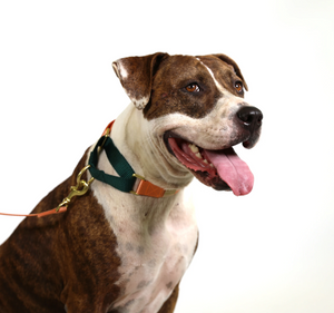 Colour Block Collection: Martingale Collar