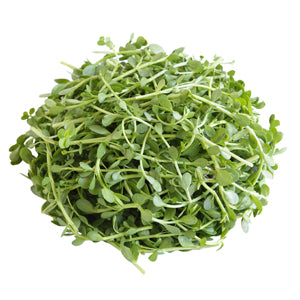 Bacopa Monnieri, An Ayurvedic Treasure