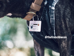 MyPetIC Collar Tag