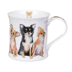 Wessex, Designer Dogs, Chihuahuas by Dunoon