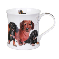 Wessex, Designer Dogs, Dachshunds by Dunoon