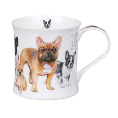 Wessex, Designer Dogs, French Bulldogs by Dunoon