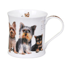 Wessex, Designer Dogs, Yorkshire Terriers by Dunoon