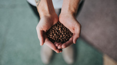 Hands holding coffee beans.